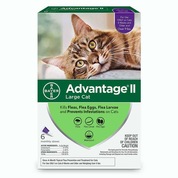 Second close looking view of the Best Flea Medicine For Cats