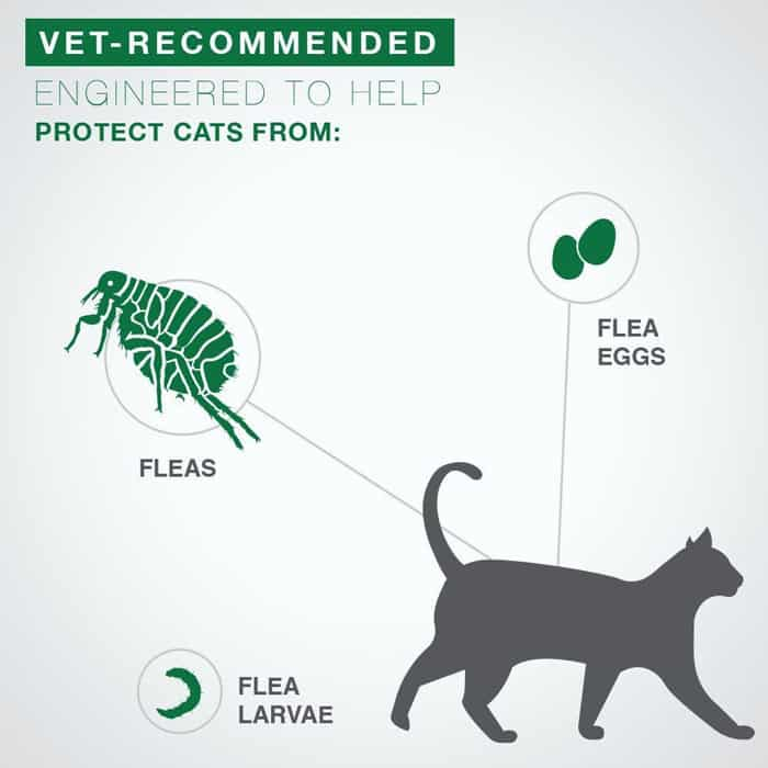 Third close looking view of the Best Flea Medicine For Cats
