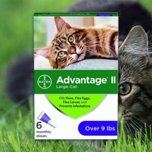 A packet of the Best Flea Medicine For Cats that prevents flea and this kind of annoying issues