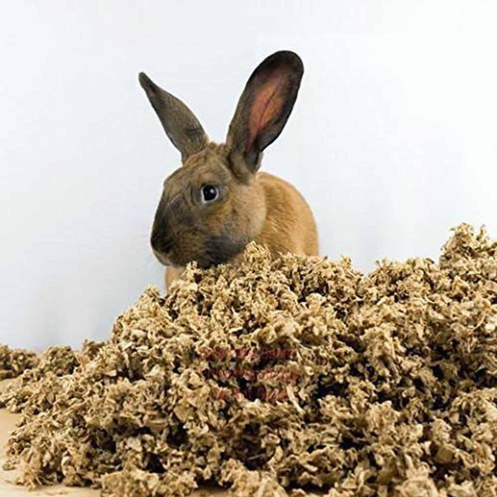 A rabbit feels comfortable with the arrangement of the Best Rabbit Bedding