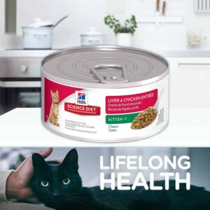 A cat with a can of healthy cat food which is a symbol of ensuring nutritious food for cats