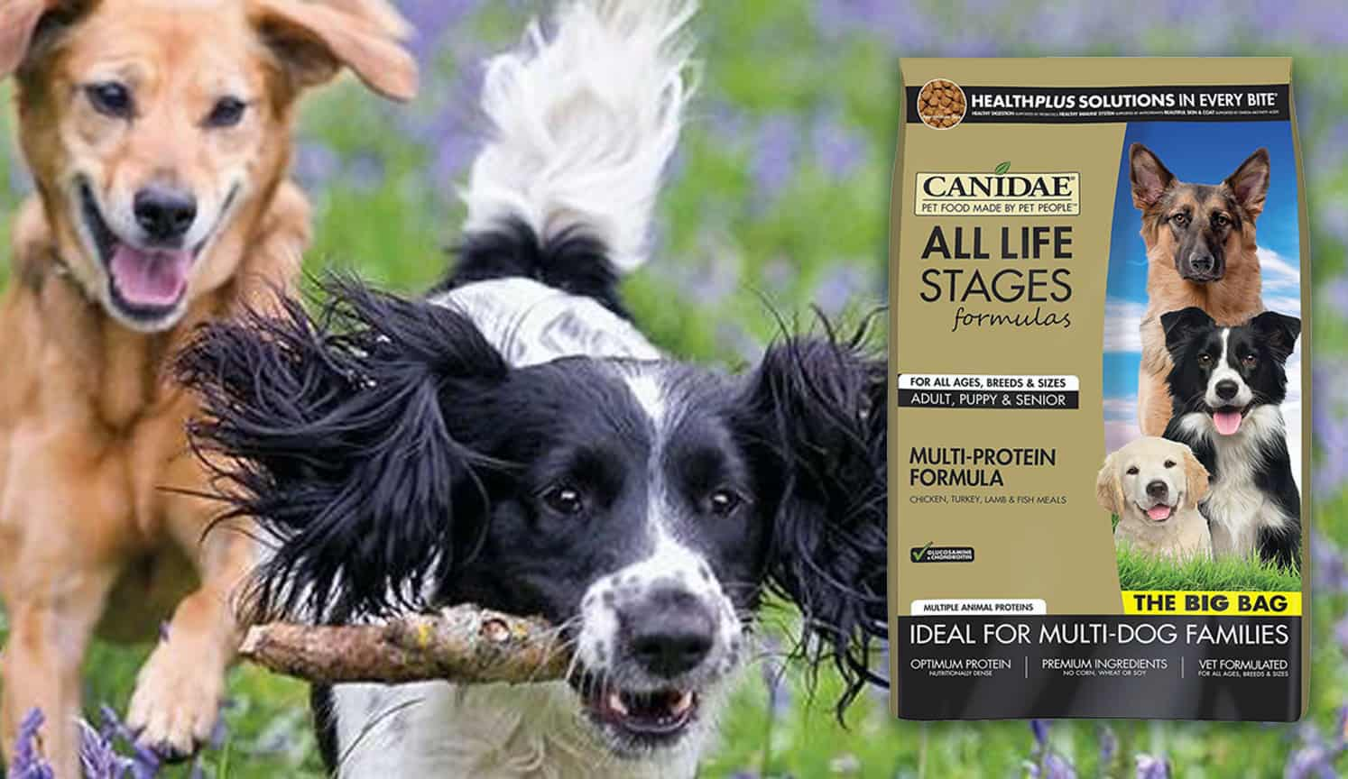 Premium Dog Food as the third related product of the Best Natural Dog Food