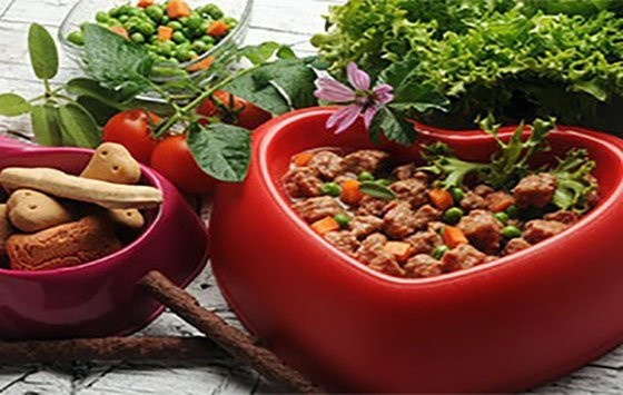 Dish of multiple pet food that brings proper nutrition for the beloved pet