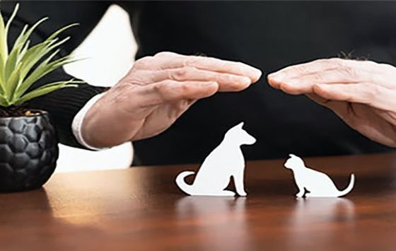 A dog and a cat toy are covered with two hands that most clearly indicate pet health care